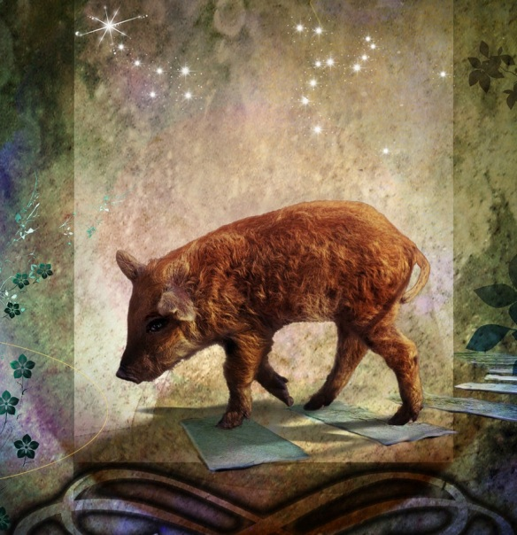 Pig & Stars