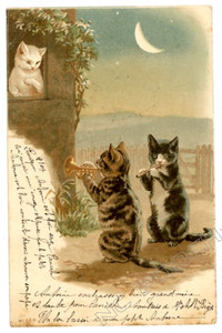 Cat Seranade