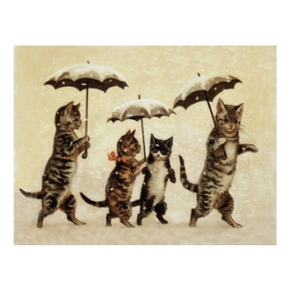 Kitties & umbrellas