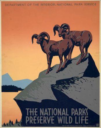 Preserve Wildlife ~ Mountain Goats