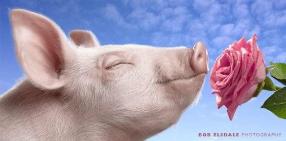 Pink Pig & Pink Rose by Bob Elsdale