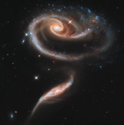 Space Rose