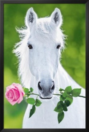 White Horse Holding Pink Rose