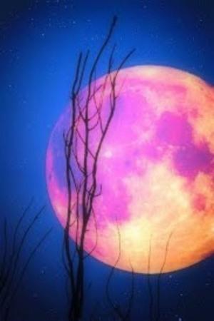 Rose Moon