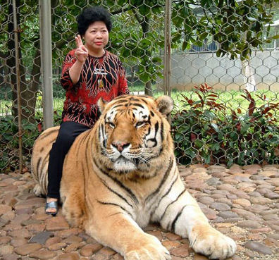 woman on tiger and peace sign
