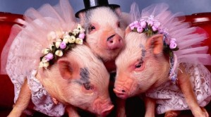 Pig Trinity