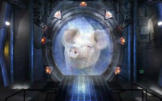 Pig Portal