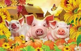 Bright Pigs