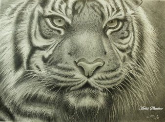 Bic Ball Point Pin | Tiger by Shadow
