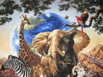 Zebra, Giraffe, Elephant, Lion, Tiger, Goat, Polar Bear