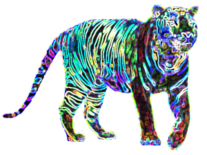 Night Star Tiger