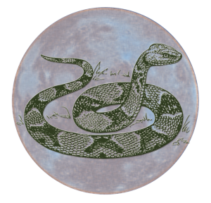 Celestial Serpent | China Rose