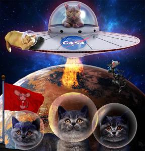 Casa Catstronauts