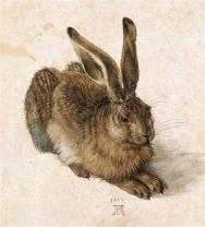 Young hare | Albrecht Durer