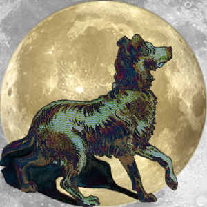 Lucky Moon Dog | China Rose