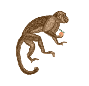 Zodiac_Monkey_sign