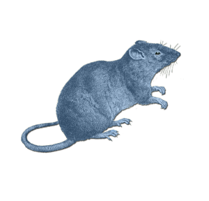 Zodiac_Rat_sign