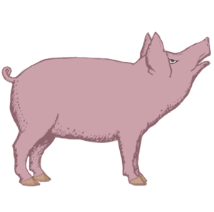 Zodiac Pig | by China Rose
