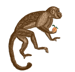 My_Zodiac_Monkey