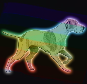 Rainbow Dog | by china rose
